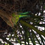 palm_tree_denizen
